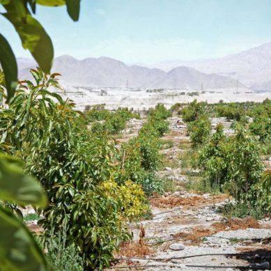 Quellaveco creará 1,750 nuevas hectáreas para la agroexportación en Moquegua