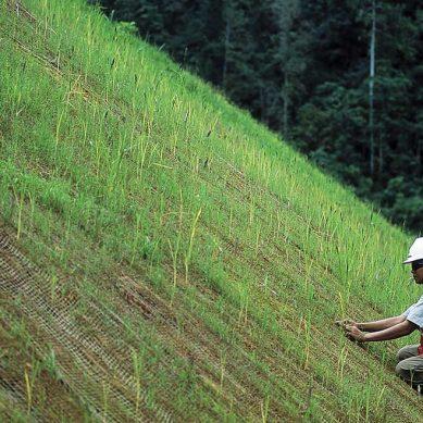 Minera Buenaventura: Ganaderos de Yanahuanca elevarán su competitividad con siembra de pastos mejorados