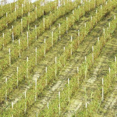 TUPEMESA presentó al sector agroindustrial productos en acero galvanizado