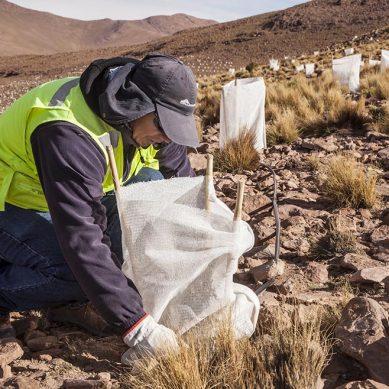 Acertados cambios al reglamento de cierre de minas