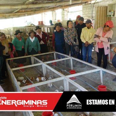 Antamina fomenta el posicionamiento del cuy como producto estrella de San Marcos