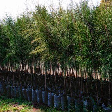 Remediación de suelos: «La gestión de pasivos ambientales no se improvisa a nivel país»