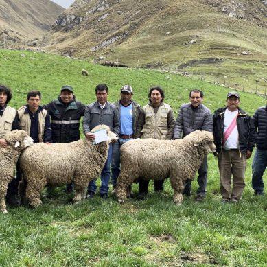 Antamina entregó ovinos reproductores a la comunidad campesina de Huaripampa