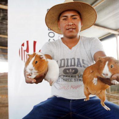 Tacna: Southern entrega cientos de cuyes de primera calidad genética a emprendedores